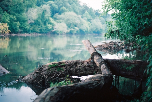 Dead Tree in Chattahoochee River