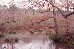 Branches Stretching Over Lake